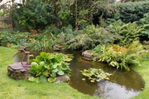 Garden Pond Winner