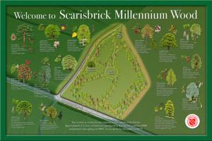 scarisbrickmillenniumwood